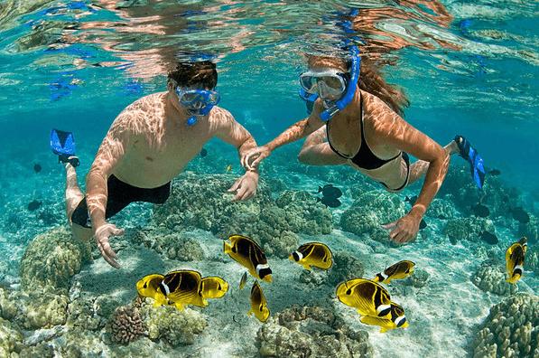 cayman islands snorkeling tours