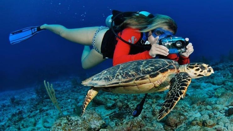 picture of a woman diving with a turtle