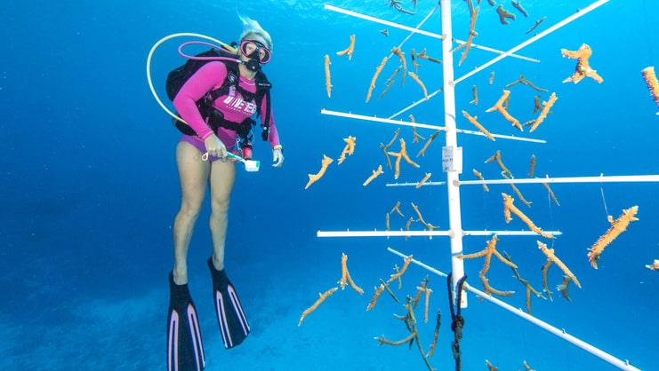 picture of women diving