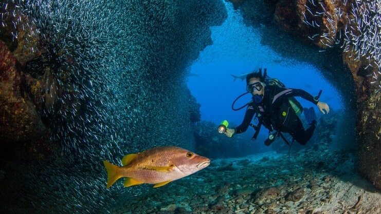 picture of person diving with fish