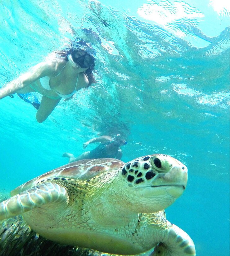 picture of turtle underwater with two snorkelers above the turtle