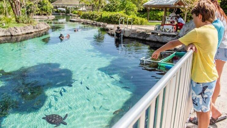 picture of snorkel pool at turtle farm