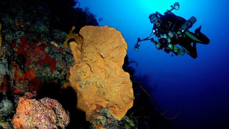picture of diver and coral