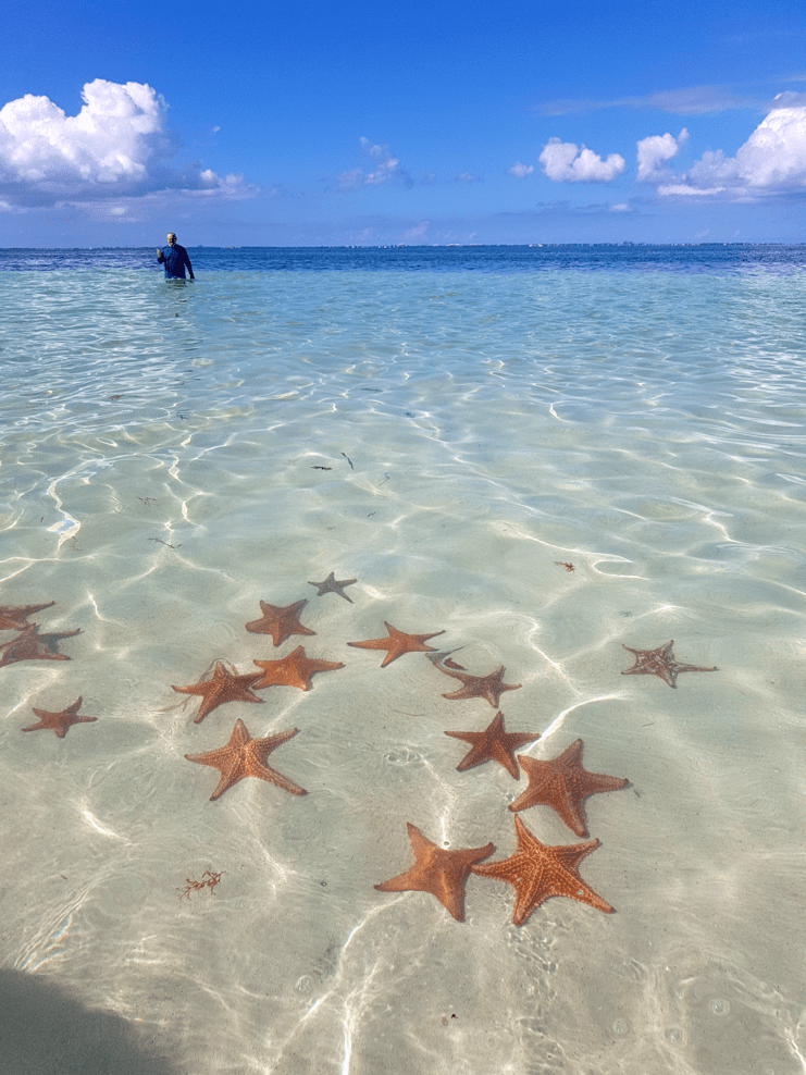 pictures of starfish in shallow water