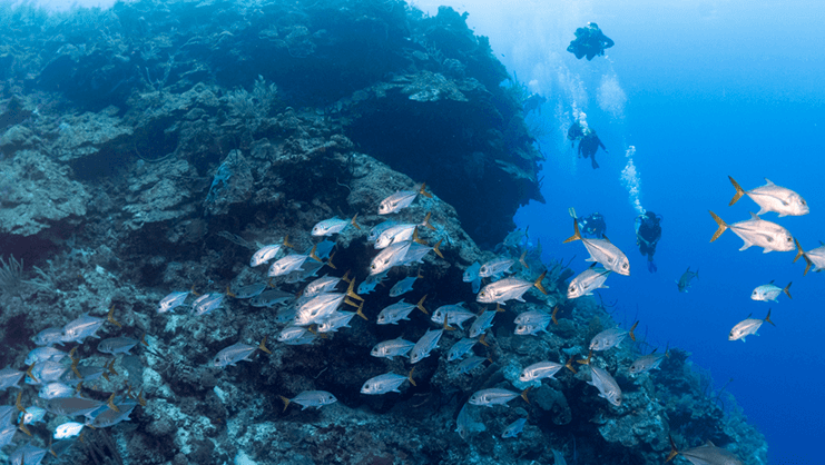 picture of divers underwater with dozens of fish