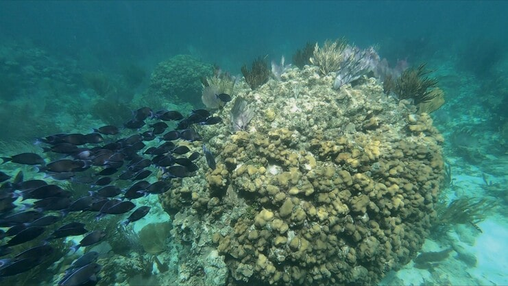 picture of lots of fish next to coral