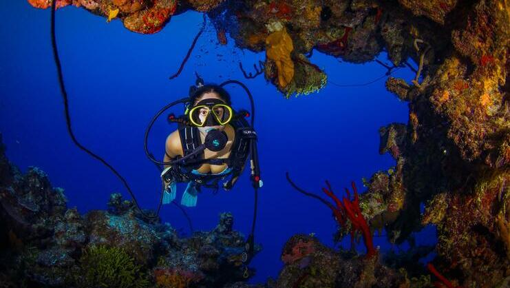 picture of diver next to orange coral