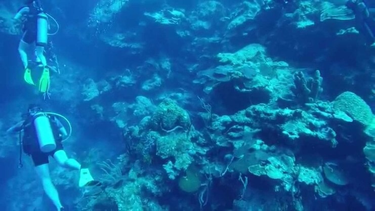 picture of two divers next to wall of coral
