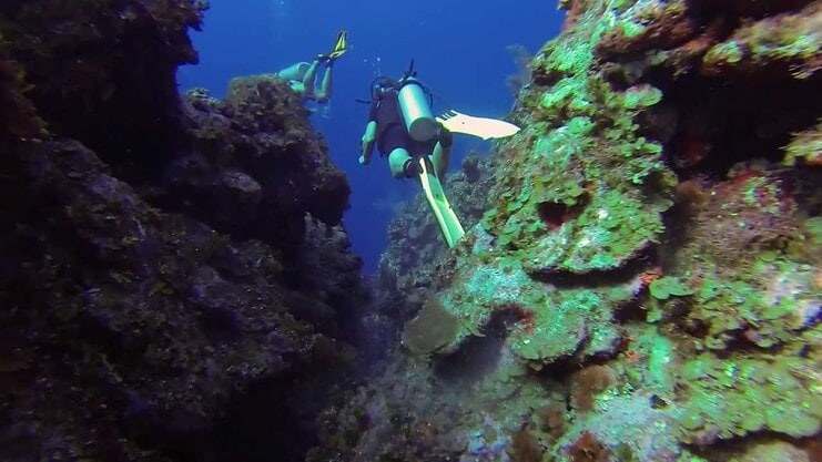 picture of person diving between two walls of coral