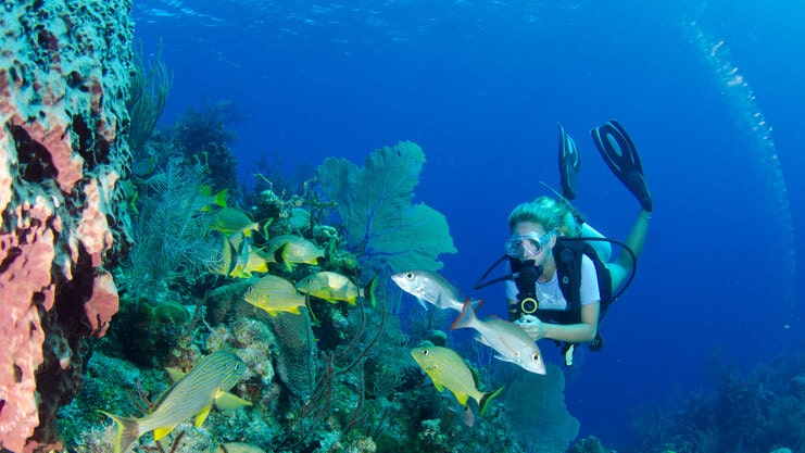 picture of woman diving next to coral